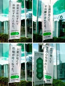 noka01_09.jpg